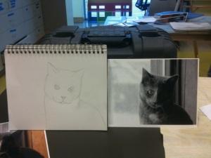 Cat sketch in progress